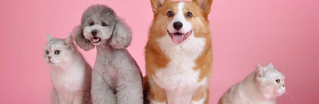 Aké príznaky a prejavy má alergia na psov, mačky a zvieracie chlpy a čo robiť doma