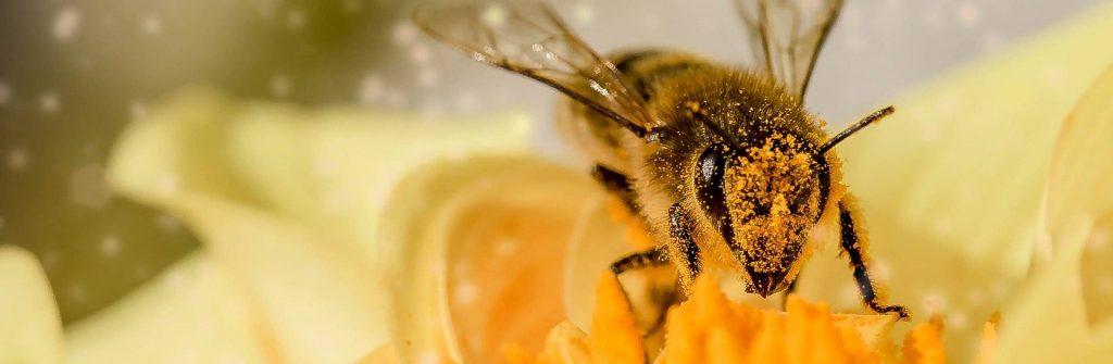 Ako sa prejavuje alergia na peľ, aké má príznaky a čo zahŕňa liečba u detí aj dospelých