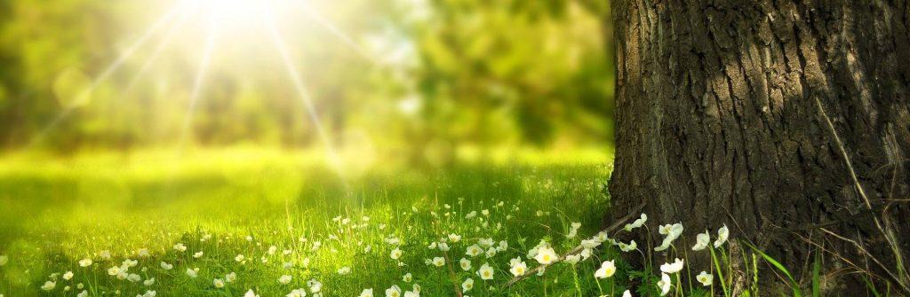 Alergia na slnko, jej prejavy a príznaky a aká domáca liečba a recepty sú najlepšie