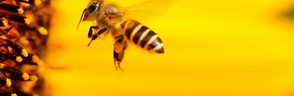 Alergia na uštipnutie osou, včelou, ovadom, komárom a iným hmyzom a čo robiť doma