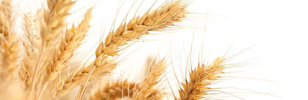 Čo spôsobuje a aké prejavy a príznaky má alergia na lepok, čo jesť a aká je liečba