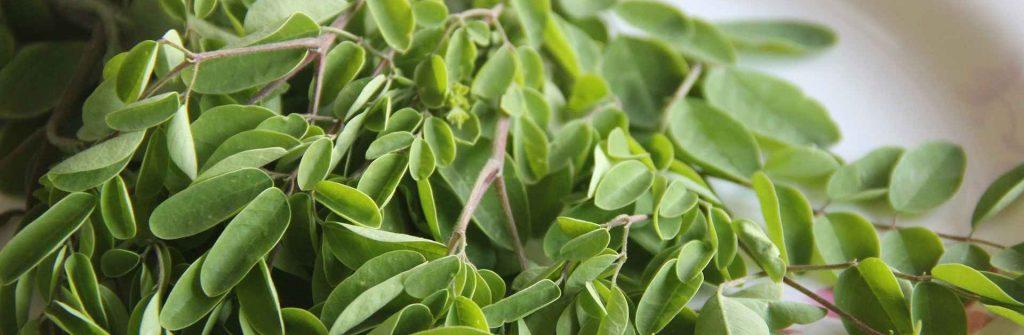Moringa: Skúsenosti, účinky a použitie ako tablety, prášok, olej, kapsule a iné produkty