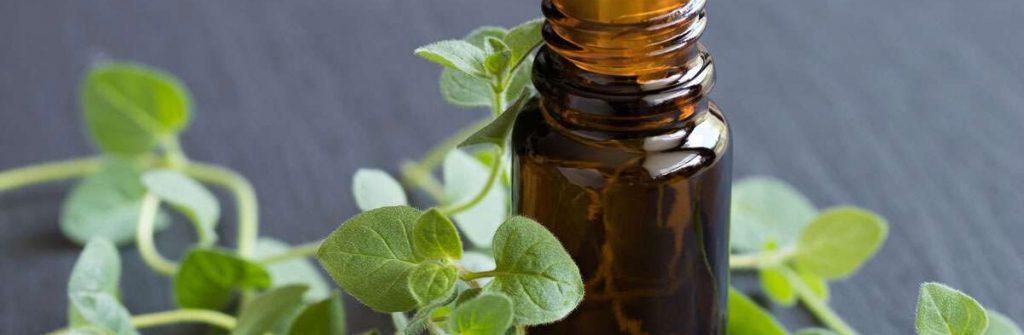Oreganový olej: Skúsenosti s ním, použitie a účinky, užívanie a možné nežiaduce účinky